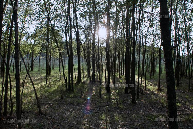 Parco della Caffarella - October 2011