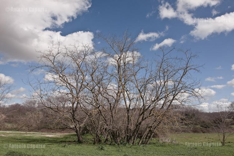 Parco della Caffarella - Marzo 2013