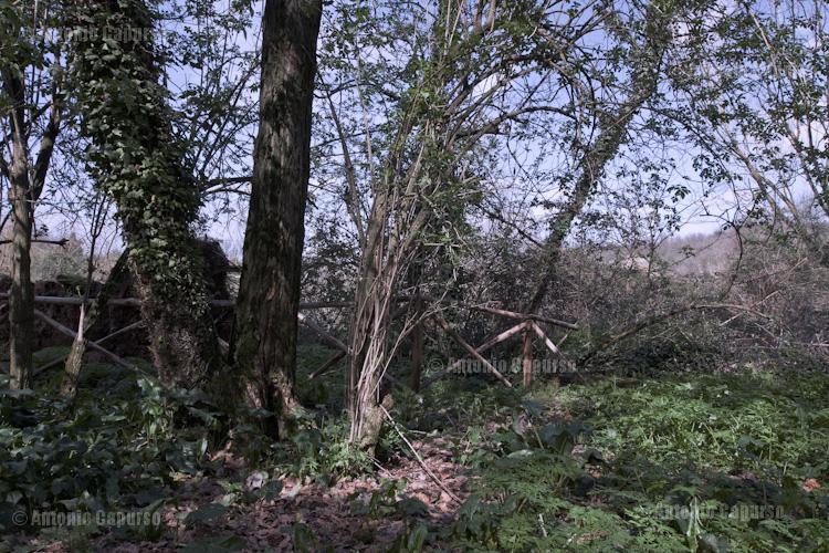Parco della Caffarella - March 2013