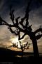 Sorento, dusk and trees - Italy, 2010
