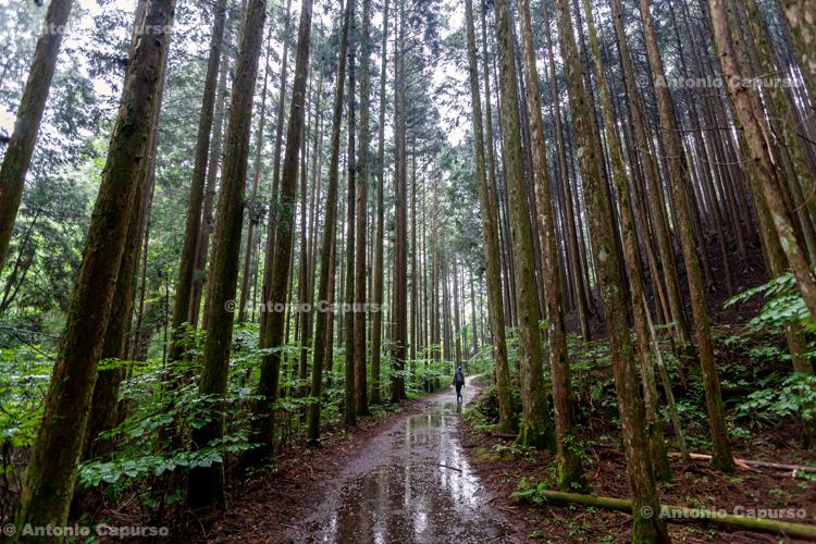 Woods near Tsumago, Kiso Valley - Japan (2018)