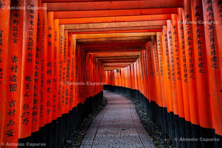 Torii Gates at Fushimi Inari-taisha Shrine - Kyoto, Japan (2018)