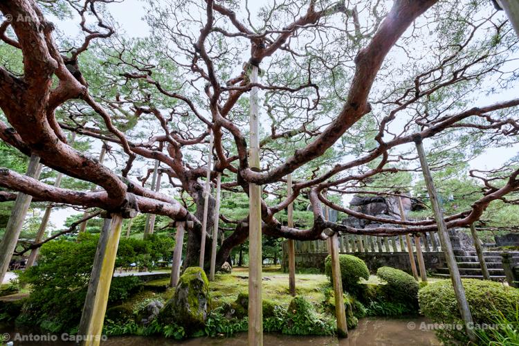 Kenrokuen Garden - Kanazawa, Japan (2018)