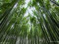 Bamboo grove in Arashiyama - Kyoto, Japan (2018)