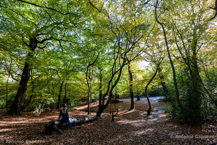 Queen's Wood, near Highgate (North London) - October 2020