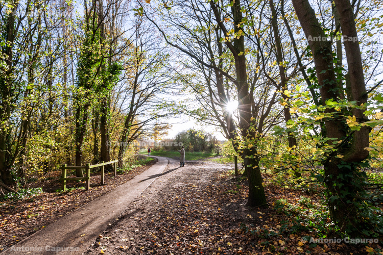 Alexandra Park, East Trail - North London, 2020