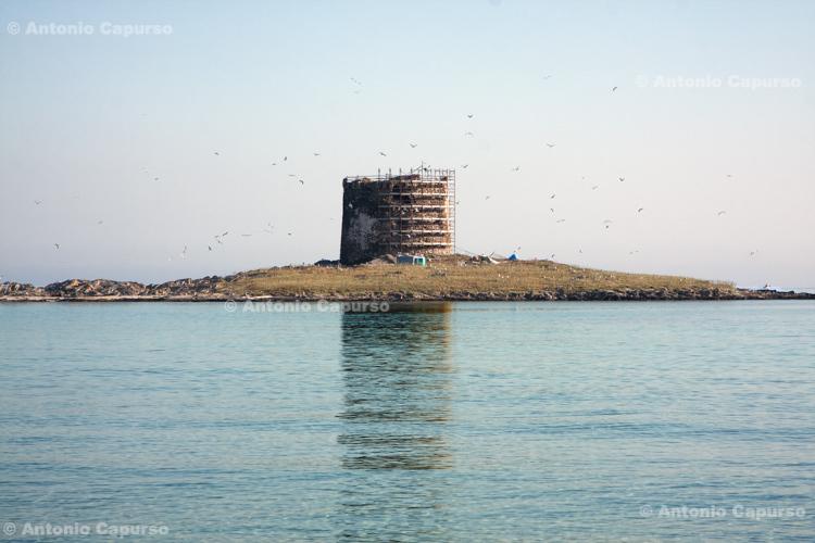 Torre della Pelosa - Sardinia, Italy - June 2010