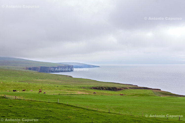 Grazing lands near Kirkwall - Orkney Islands, mainland - Scotland - UK, 2012