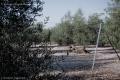 Countryside near Molfetta