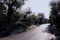 Countryside near Molfetta (3)