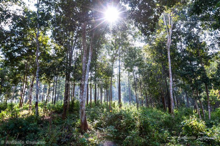 Thailand forest near Chiang Mai - Thailand, 2013