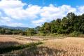 Rice field near Chiang Mai - Thailand, 2013
