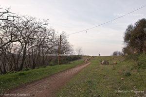 Parco della Caffarella - January 2012
